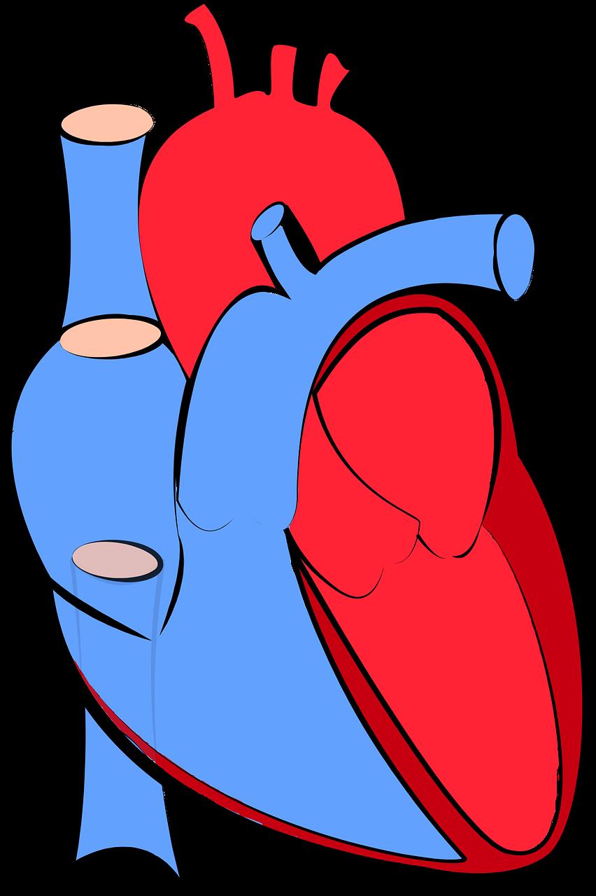 Den nye iBeat kan identifisere hjerteinfarkt